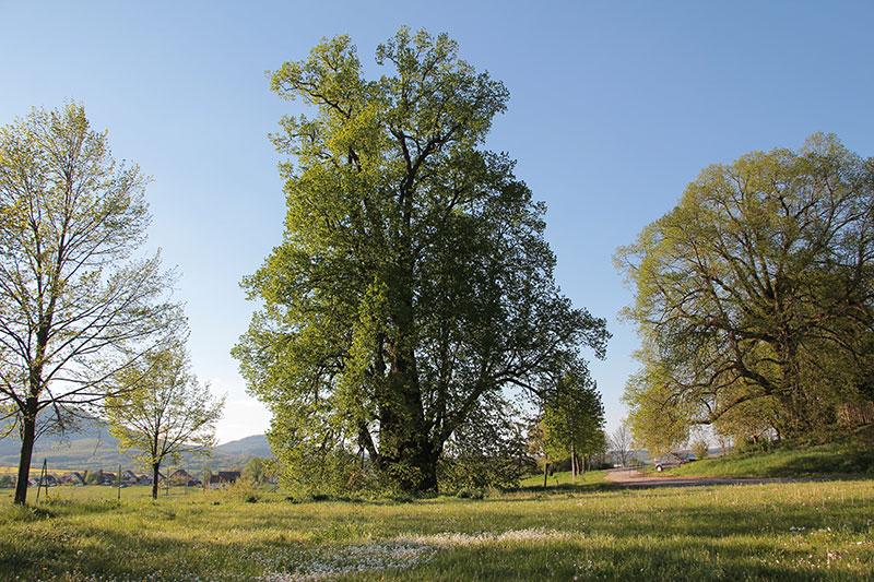 Die Wirbelsäule - Baum des Lebens