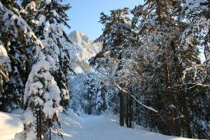 Feldenkrais - Schneeschuhwandern Ruhpolding